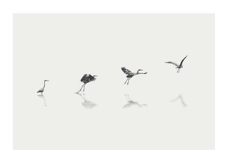 Bird Taking Off-1