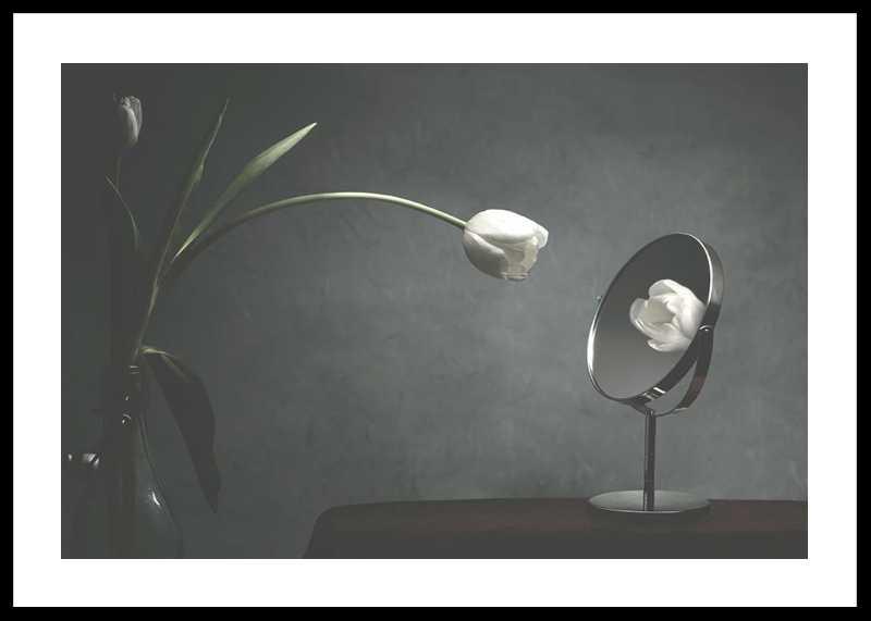 Vanity Tulip-0