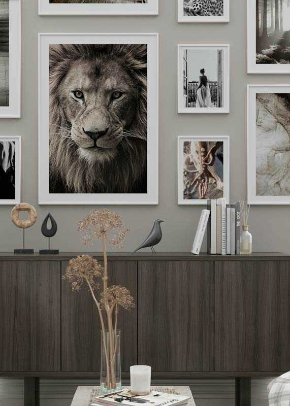 African Lion-4