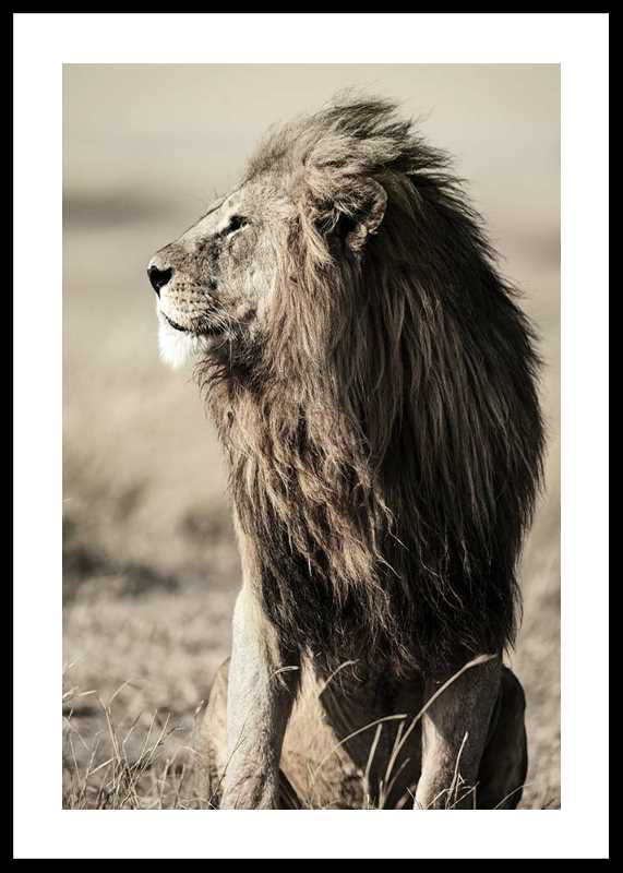Lion In Profile-0