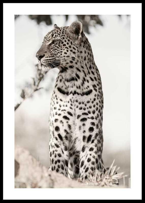 African Leopard-0