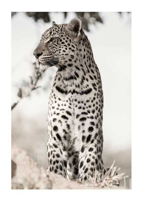 African Leopard-1