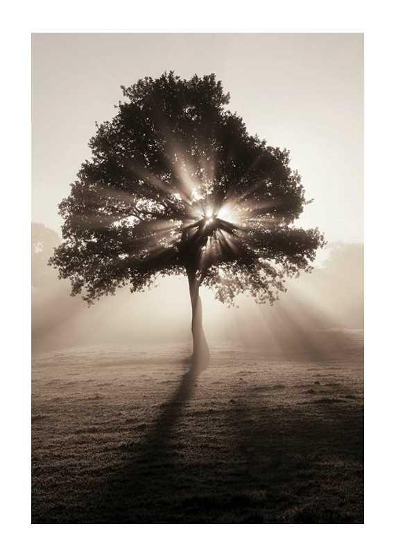Tree In Sunrise-1