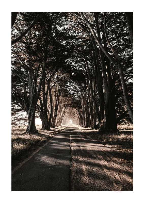 Road Amidst Trees-1
