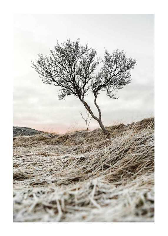 Iceland Tree-1