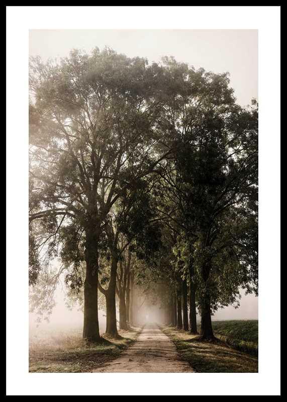 Morning Road-0