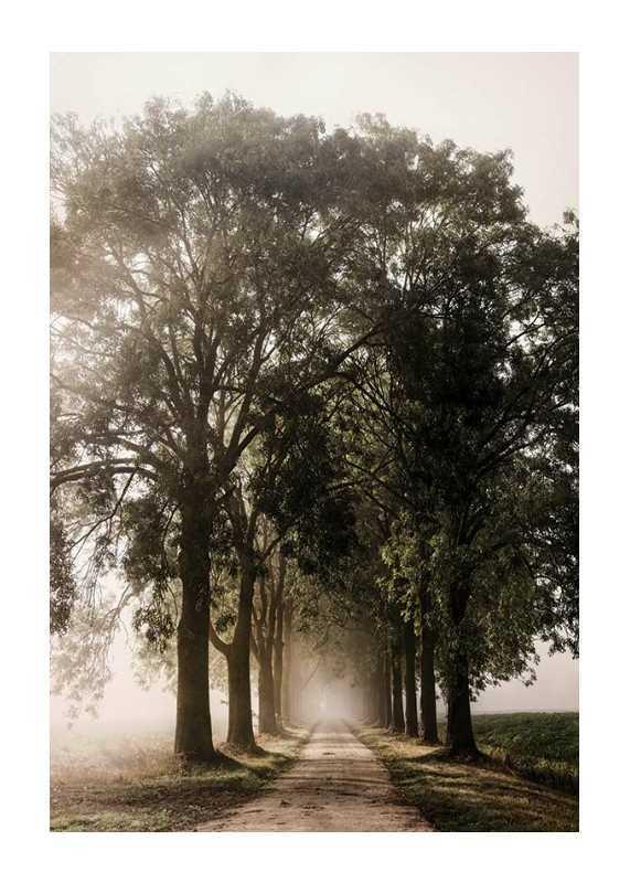 Morning Road-1