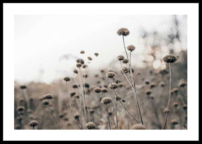 Monochromatic Flowers