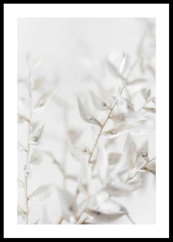 White Dried Flower